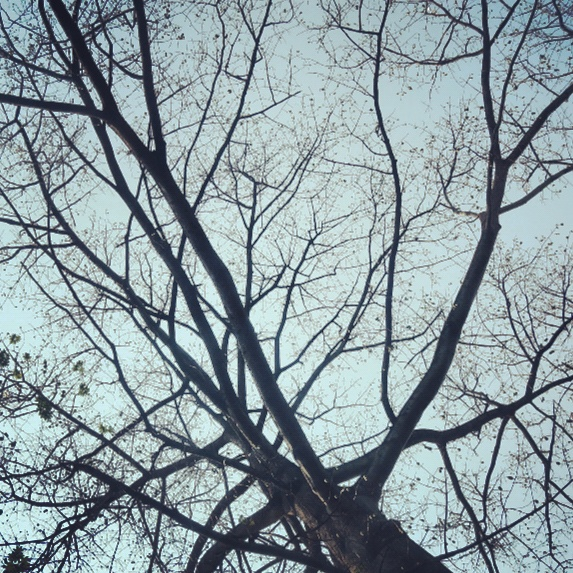 Pinggir Kebun Raya Bogor