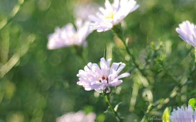 http://fotobabij.blogspot.com/2015/08/marcinki-i-soap-bubble-bokeh-1920x1200.html