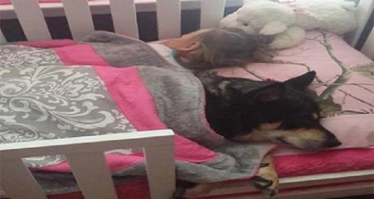 ترك الاب كلبه ليحرس ابنه الرضيع .. أنظرو ماذا حدث