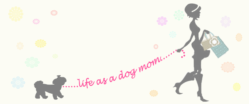 Life as a dog mom!