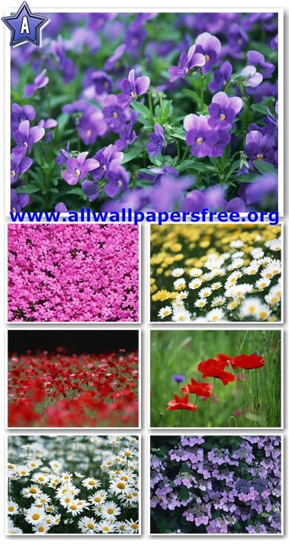 80 Beautiful Blooming Scenery Wallpapers HD 2950 X 2094