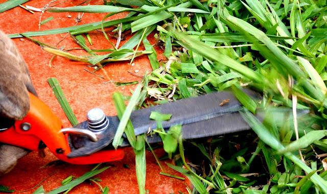 Como cortar el Césped