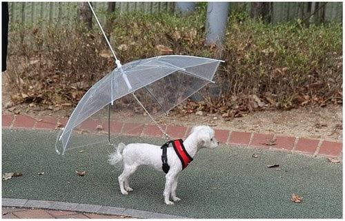 Menarik Payung Khas Untuk Anjing Elak Dari Hujan dan Panas
