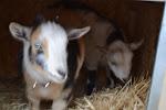 Rowland & Ciggy