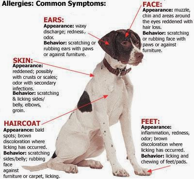 Learn More About Your Pet Health In Our Blog Allergroom