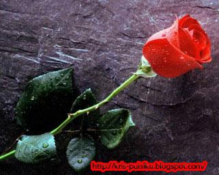 Kumbang untuk Mawar