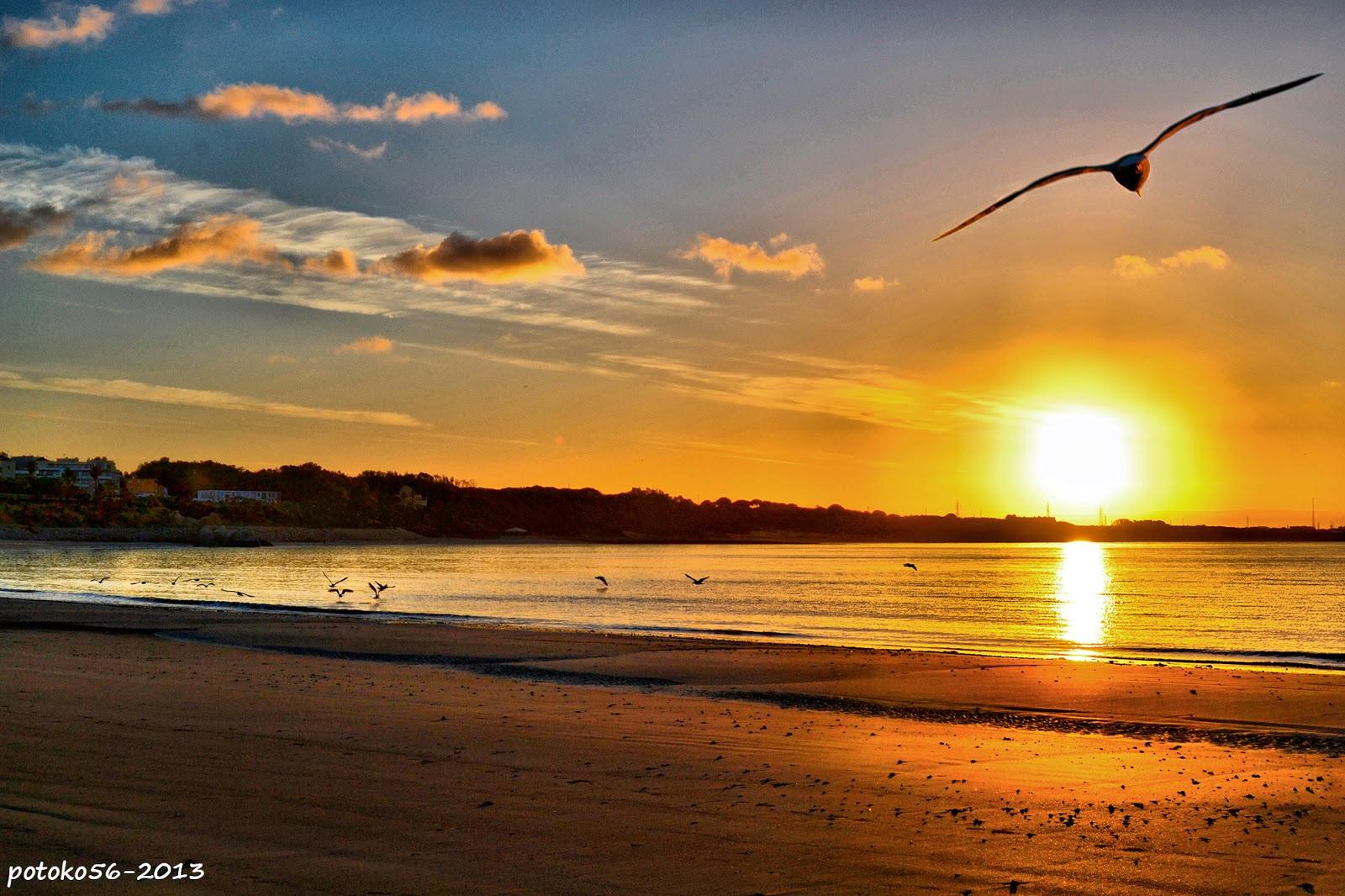 Unas gaviotas en el amanecer de Rota