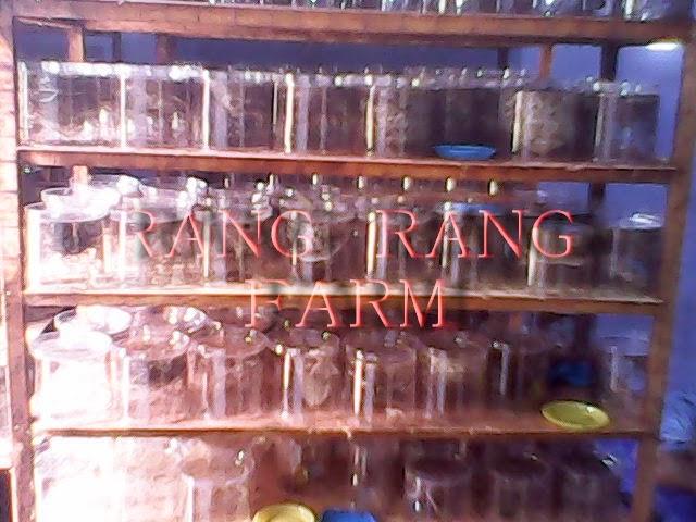 rangrang farm