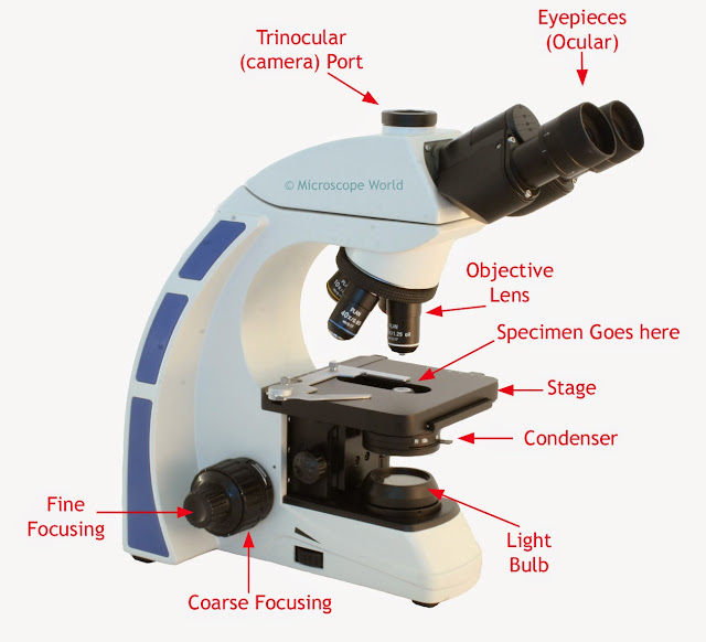Image explaining how a light microscope works.