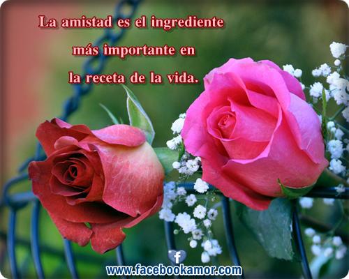 Imagenes De Rosas Preciosas Con Frases - Imágenes de flores rosas y Plantas 365 Imágenes bonitas