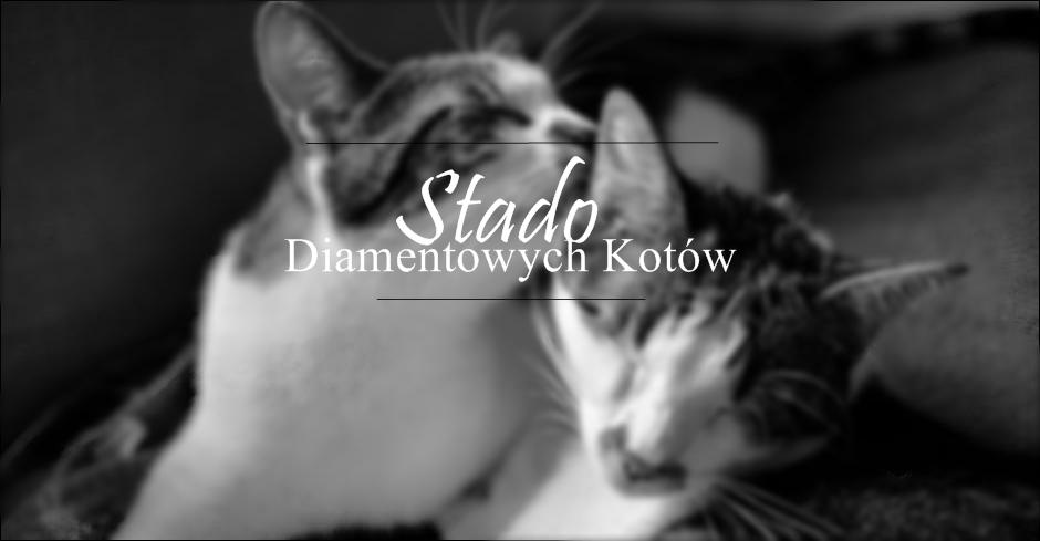 Stado Diamentowych Kotów
