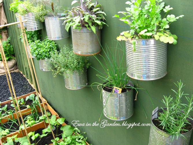 Herbs growing on the wall in recycled containers