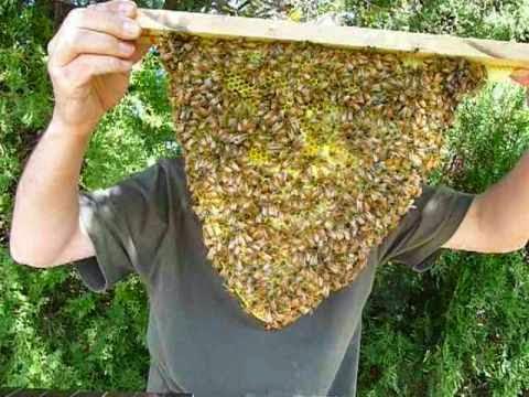 Top Bar Hive Beekeeping An Alternative