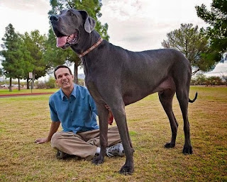 World's Tallest Dog, Giant George Dies