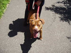 6/28/12 Duke Needs Out Transport Available. Clic Pic