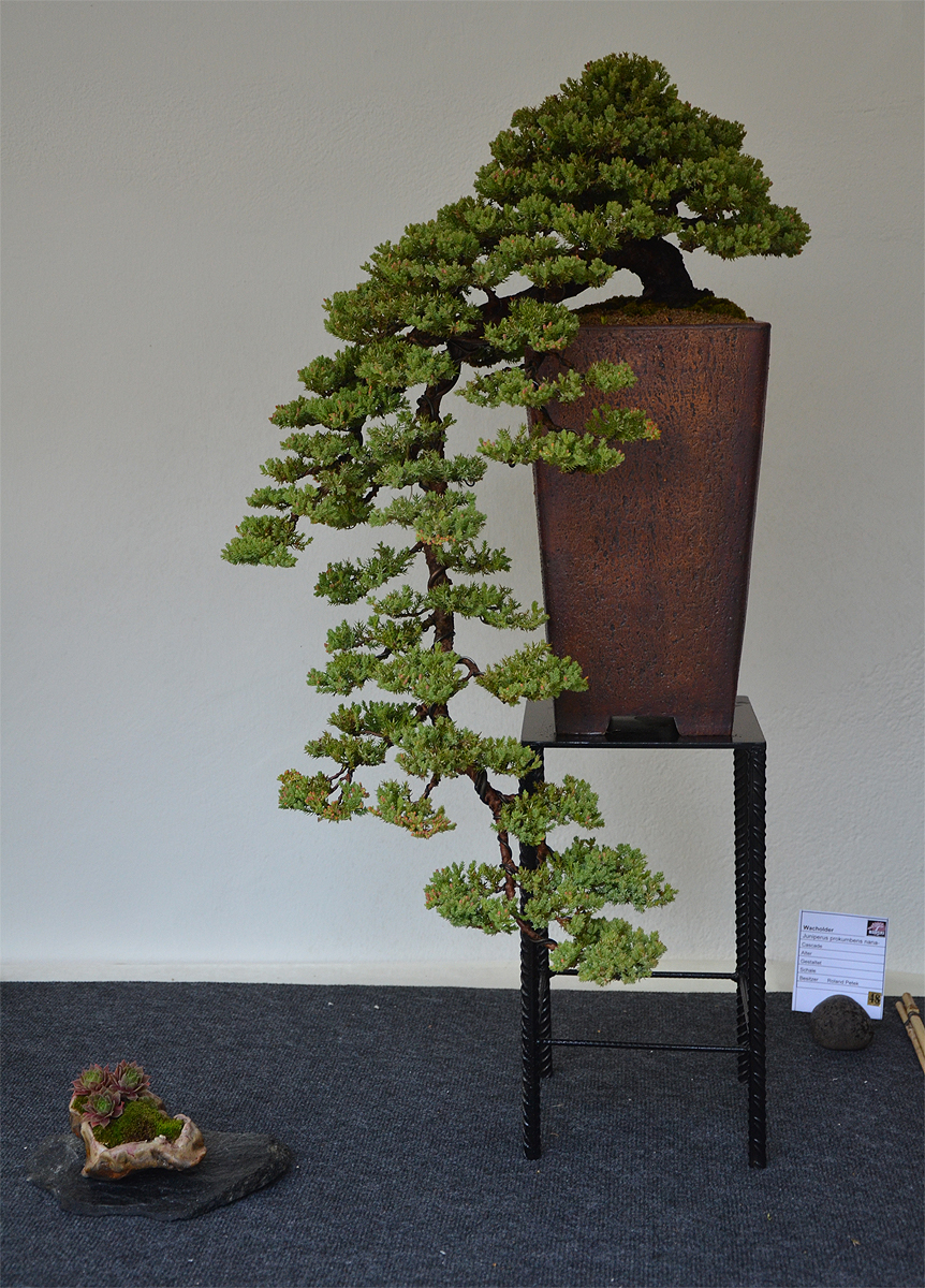 Bonsai Living Art October 2011