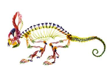 zoo_Chamaeleonidae