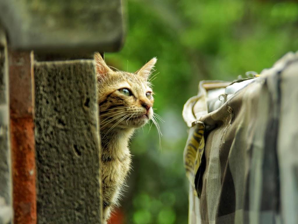 "<img src=""http://4.bp.blogspot.com/-wL_3DT1hxNg/UtrgRAtQO1I/AAAAAAAAI5M/zBNHV17c6Xk/s1600/spy-cat.jpeg"" alt=""spy cat"" />"