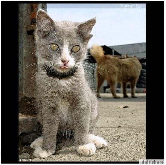Kucing Unik Bertelinga Lima Di Rusia Dairishare