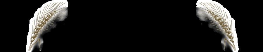 bông lua