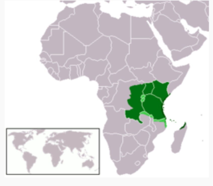 west africa and swahili city states