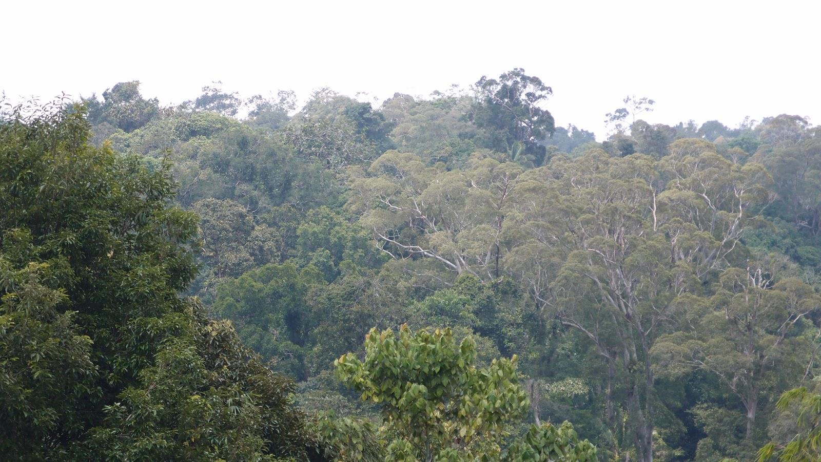 Bukit Barisan National Park Hasim S Space