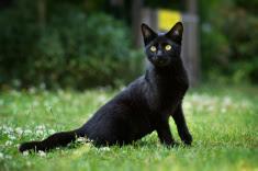 Suerte del gato negro, tarot presencial., tarot barato, tarot economico, tarot en barcelona, tarot fiable, tarot gratis, videncia economica, tarot telefónico