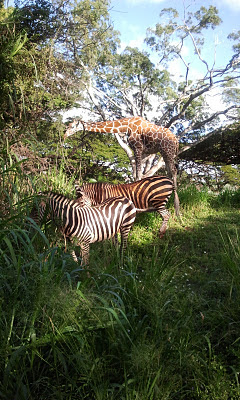 photo of Zebras and Giraffes