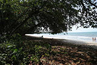 Jungle and the sea in Cahuita - Costa Rica