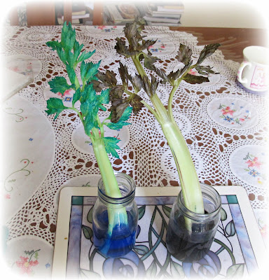 image food colouring and celery overnight soak
