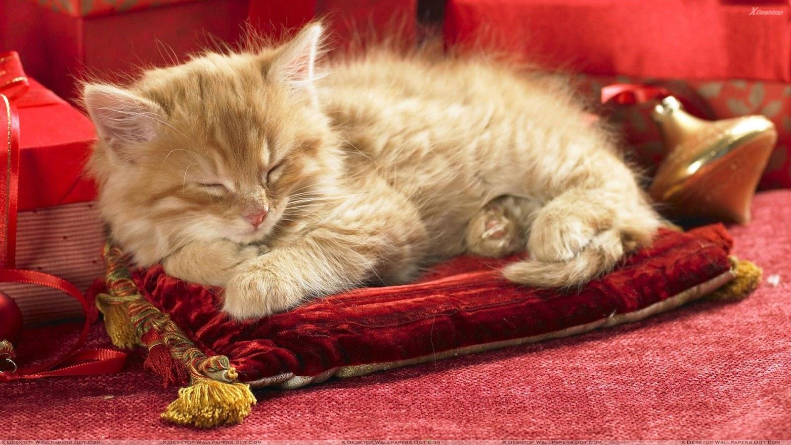 Royal Rest Pillow