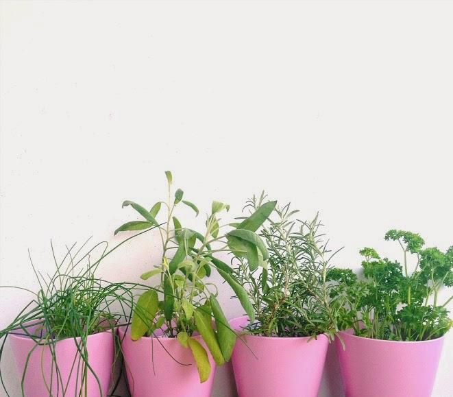 apartment herb garden 30 before
