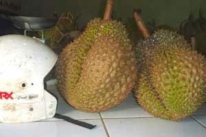 Buah Durian sebesar Helm Full face