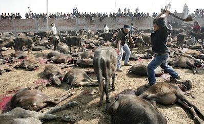 2013 07 17 205627 Penyembelihan Terbesar Paling Kejam Keatas Haiwan