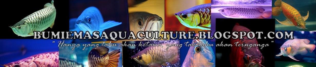 Bumi Emas Aquaculture (BEA) ~ Arowana