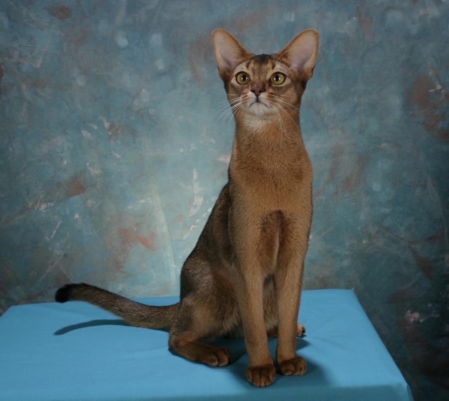 orange cat paw