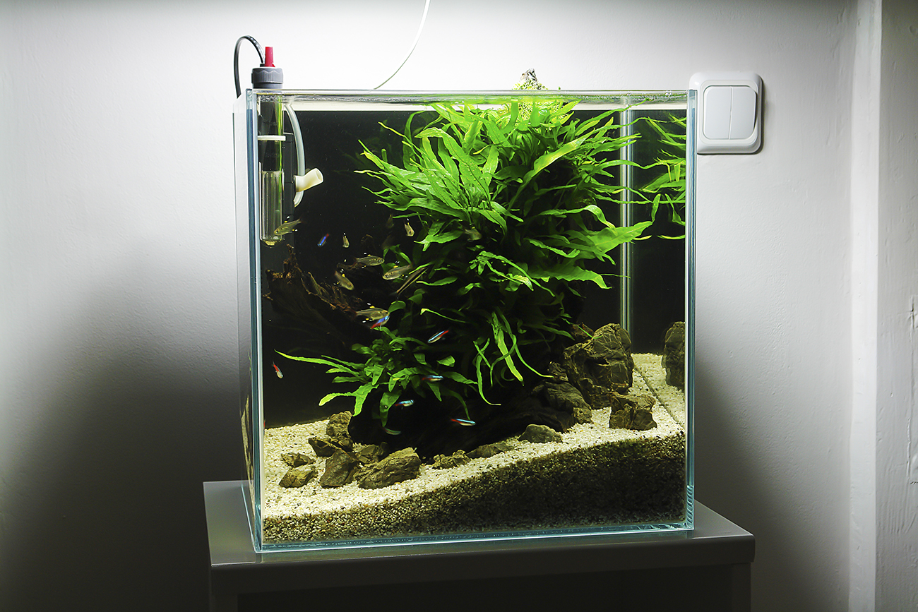Aquascape: 20L Nano   Wood, Stones, Microsorum Pteropus, Microsorum Needle  Leaves, Riccia Fluitans