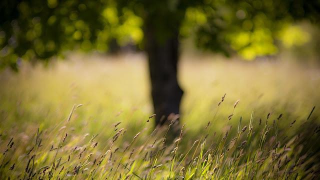 Grass Late Summer HD Wallpaper