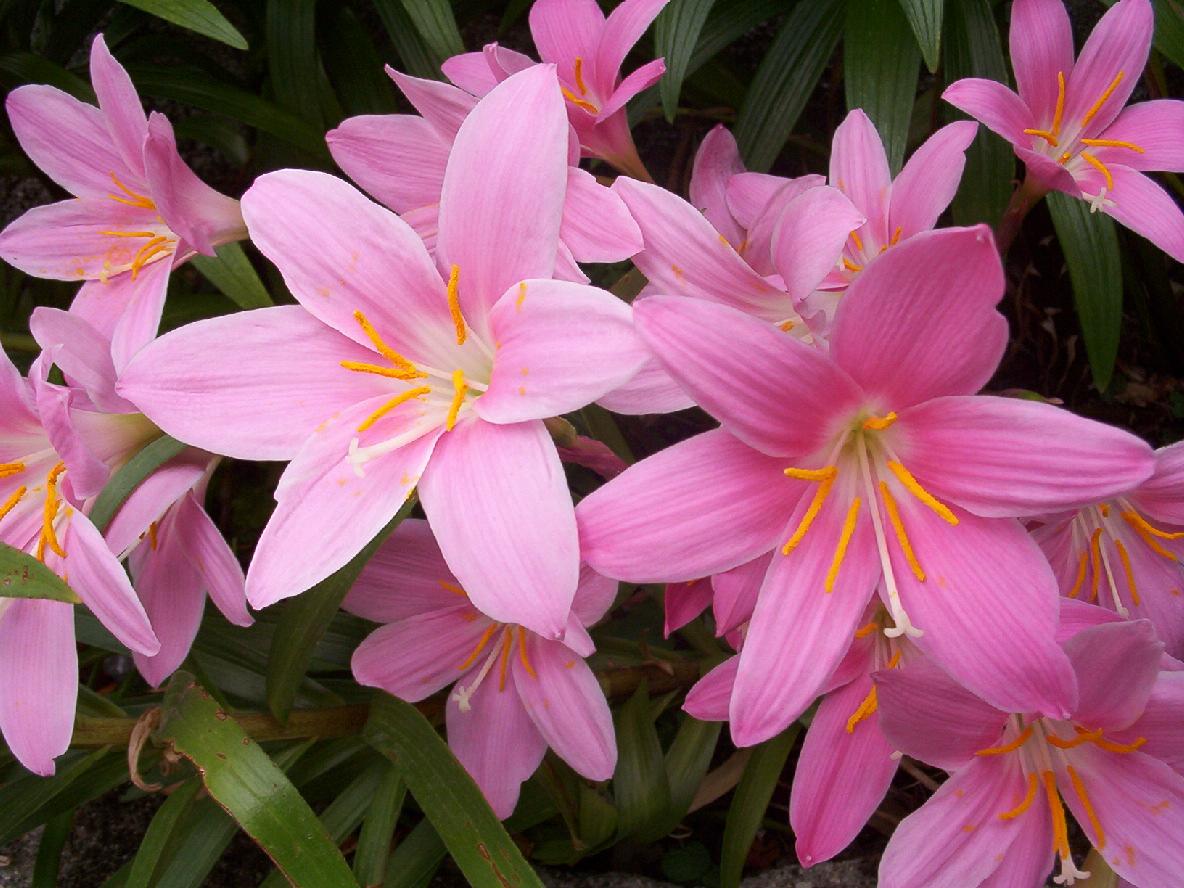 Historias flores bonitas - Fotos de flores bonitas ...
