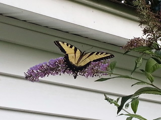 Butterflies   Navigating Hectivity by Micki Bare