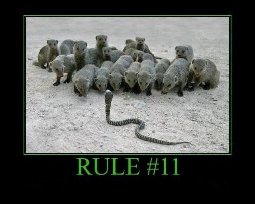 regel nr 11