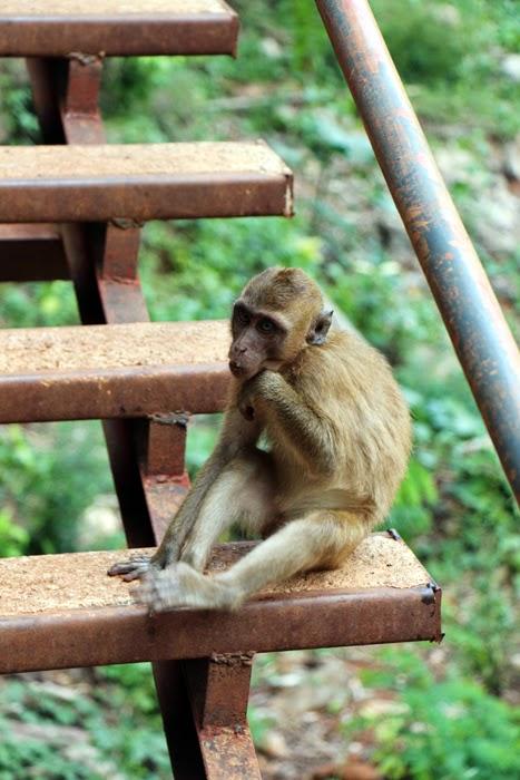Khao Sok Affen Tempelanlage