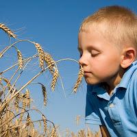 menino cheirando espigas de trigo