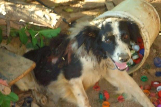 Cãozinho queimado no Natal em Santa Luzia recebe a solidariedade de grupo de moradores