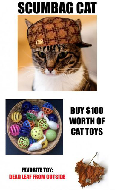 Scumbag Cat With His Favorite Toy