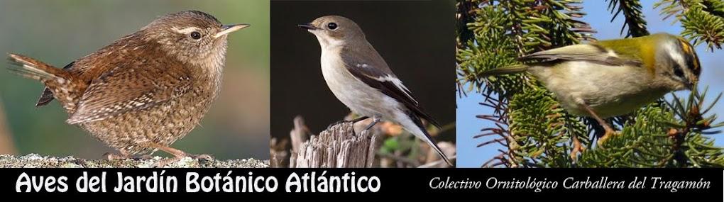 Aves del Jardín Botánico Atlántico de Gijón