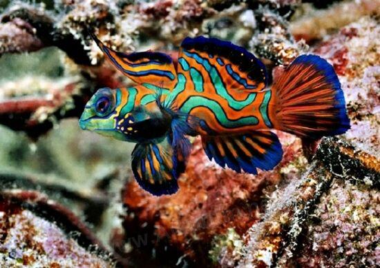 شاهد بالصور: أسماك ستبهرك جمالها