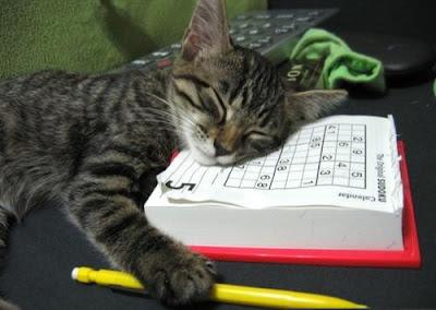 cat sleeps boring day