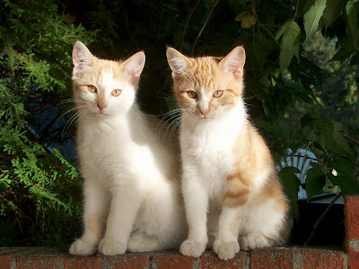 Cute Cats Pictures