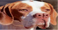raza perro Catalburun